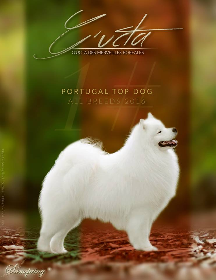 G'ucta TOP DOG 2016 all Breeds in Portugal!!!